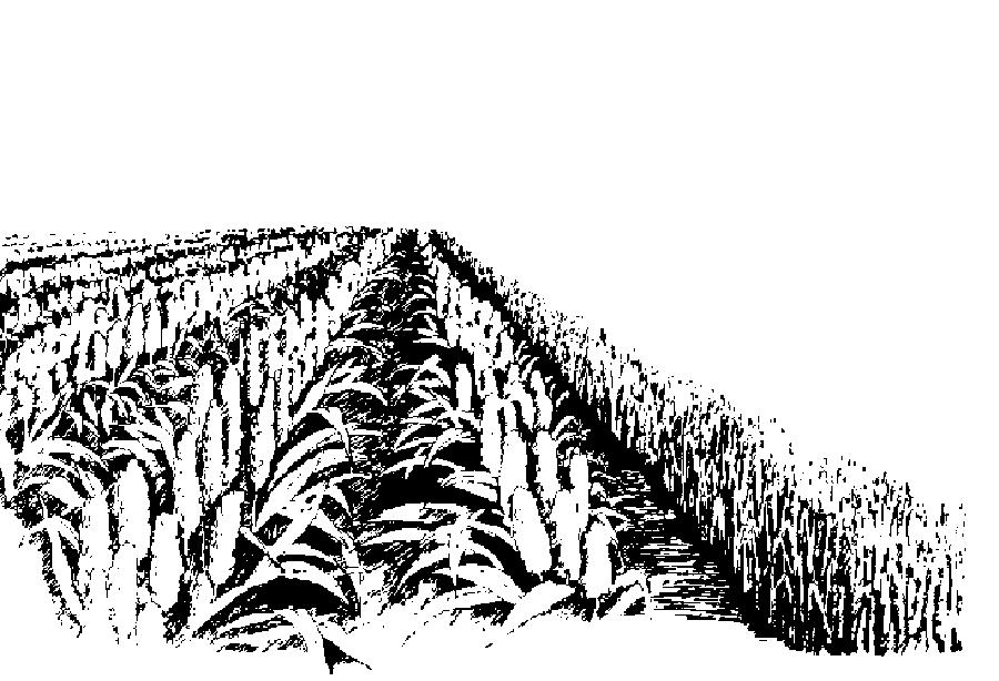 line drawing of row crop