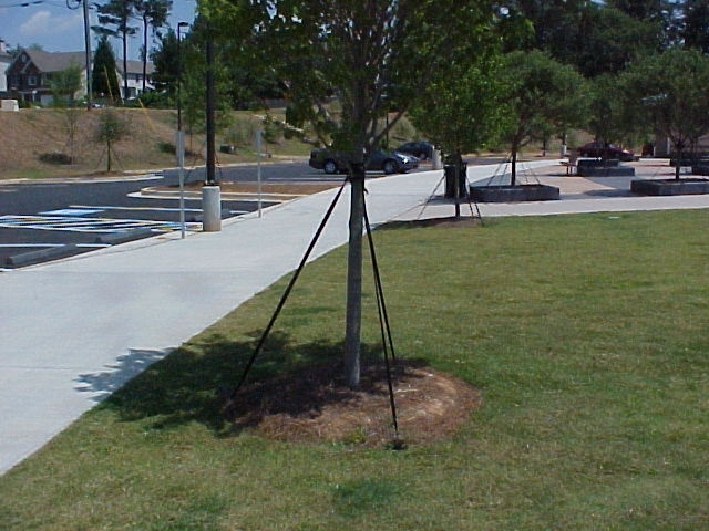 Eliminating grass and weeds from around the tree trunk with mulch will reduce mower damage.