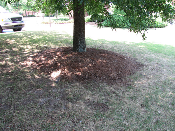 Young trees benefit from organic mulch applied