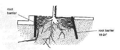 Root barriers prevent unwanted root growth under curbs and sidewalks.