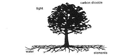 Roots collect water and essential elements that move up the trunk and into the branches. The leaves lose water, collect carbon dioxide and light, and manufacture food, which moves down the branches and trunk and back into the roots.