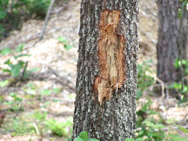 Equipment use, such as in construction activities, can cause wounds to trees, increasing their vulnerability to pests and environmental stresses.