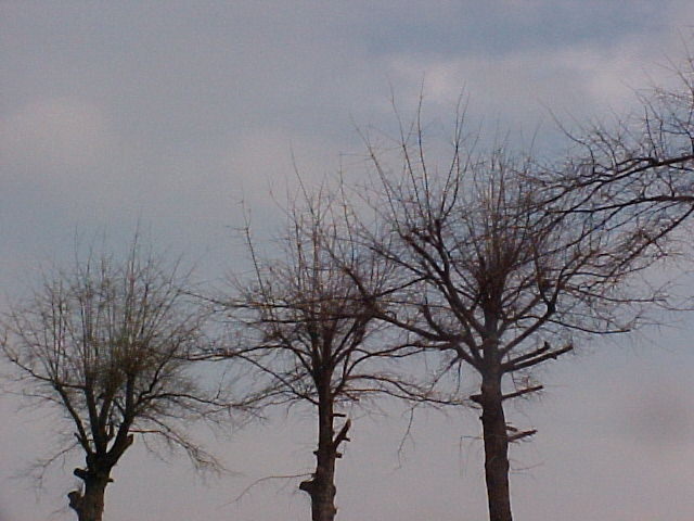Trees that have been topped are weakened and are more susceptible to damage and pests.