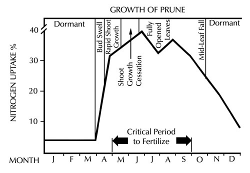 graph showin relationship between nitrate uptake efficiency of nonbearing prune trees and their growth cycle
