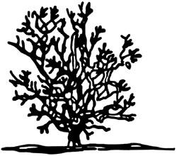 Proper method of pruning crape myrtle