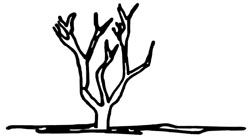 Proper method of pruning a crape myrtle