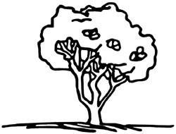 proper method for pruning a crape myrtle