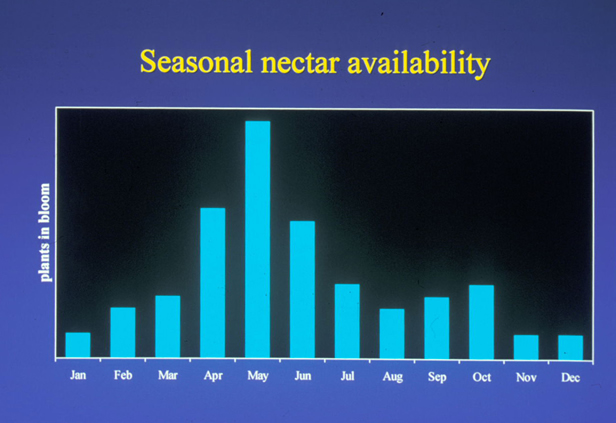 Seasonal nector availability top