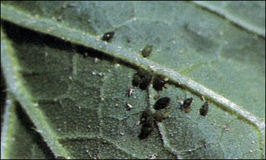 stem 