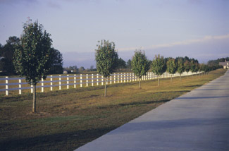 Example of a PVC rail        fence