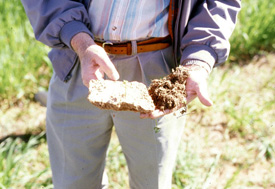 Comparison of crusted soil to normal soil