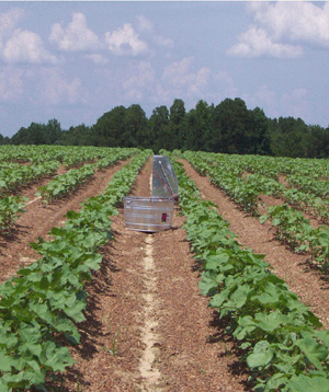 Figure 1. The EASY        Pan Irrigation Scheduler in operation on cotton research plots.