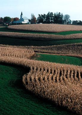 Figure 11. Contour   stripcropping, alternating bands of corn and alfalfa on the Iowa-Minnesota   border. <em>Photo by T. McCabe, USDA-NRCS.</em>