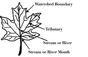 Figure 6. A maple   leaf can be used to represent a watershed.