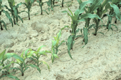 Figure 21. 