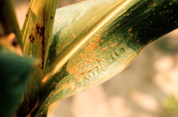Figure 38. 