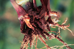 Figure 43. 
