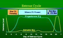 hormone estrous cycle