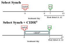 select synch and Select Synch + CIDR