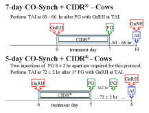 7-day CO-Synch + CIDR