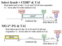 Select Synch + CIDR & TAI