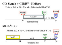 CO-Synch + CIDR - Heifers