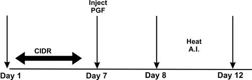 >Controlled        Internal Drug Release