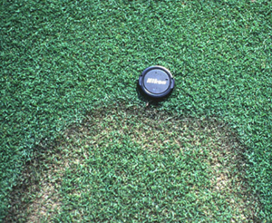 Figure 17. Brown patch ring on bentgrass.<br>       [<em>Photo:</em> L. Burpee]