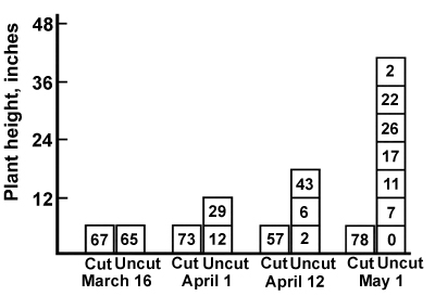 Figure 6. Distribution of buds per square foot by 6-inch height intervals on Yuchi arrowleaf clover cut every two weeks, or uncut. (From <em>Southern Forages, 2nd Edition</em>. Adapted from original data of Hoveland, <em>et al., </em>1972.