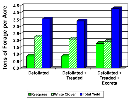 Figure 7. Effect of defoliation, treading and excreta return to pastures on yield of perennial ryegrass and white clover pastures stocked at 10 sheep per acre. (Adapted from Currl and Wilkins, 1981.)