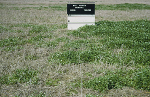 Photo of field trial results showing the difference between chemical application and no treatment on ball clover.