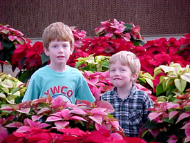Image depth is significant because of the poinsettia blooms in front of the children as well as behind them.