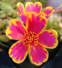 Same flower photo resized The resized image shows considerable deterioration.