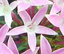 digital image that looks less clear because it has been enlarged