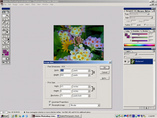 screen shot showing image size options