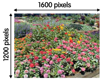 Shows that the size of the image is 1600 pixels wide by 1200 pixels tall