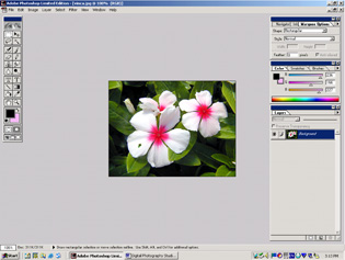 screen shot showing vinca image with blemish