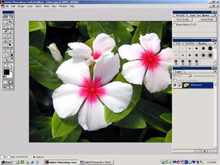 screen shot showing corrected vinca image
