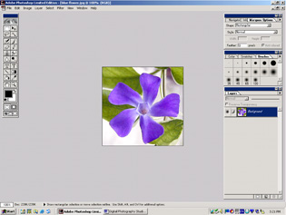 screen shot showing blue flower image