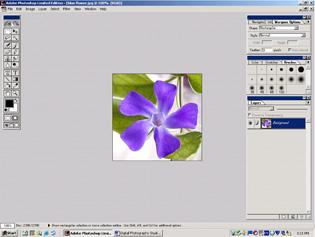 screen shot showing blue flower image