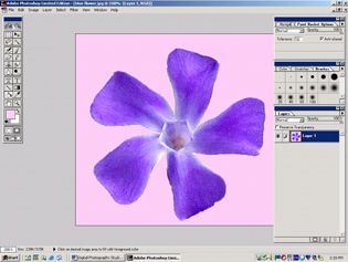 screen shot showing image with pink background