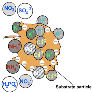 illustration of substrate particle with ions on the surface