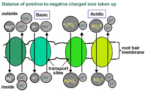 diagram showing balance of positive-to-negative charged atoms