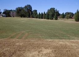 Herbicide tracking. [Photo: Clint Waltz]