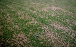 Fertilizer misapplication. [Photo: Alfredo Martinez]