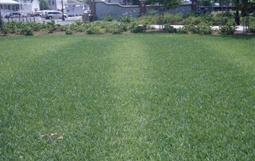 Fertilizer skips. [Photo: Clint Waltz]