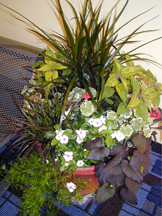 Combination gardens can be medium to large, free-standing containers or smaller, tabletop arrangements, used as a centerpiece.