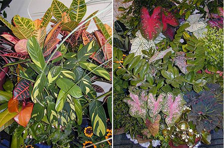 Combination Garden (High- and Low-Light Adapted Plants