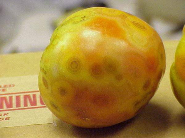 Fruit symptoms from TSWV