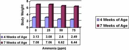 Figure 3. Exposure to ammonia concentrations as low as 25 ppm for the first 28 days can have a negative effect on body weight at both 4 and 7 weeks of age (Miles et al. , 2004).